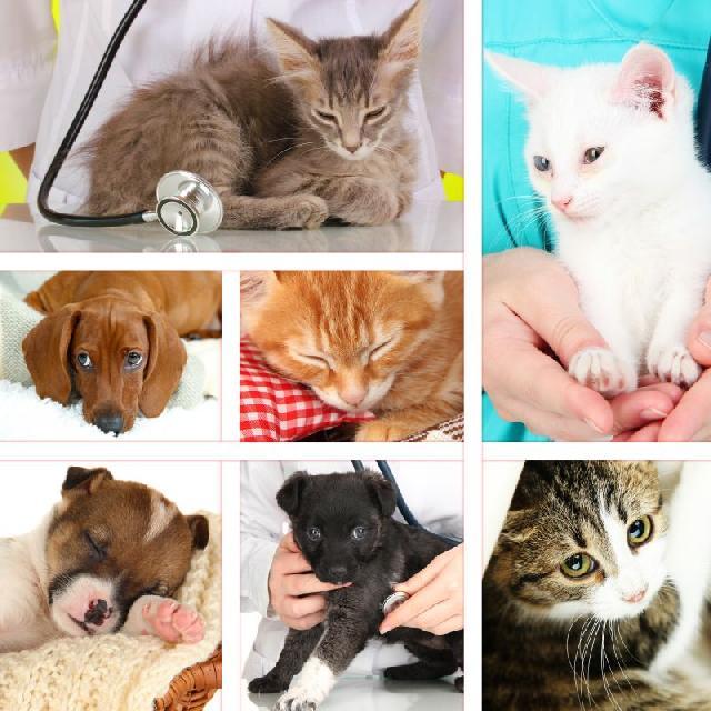 Cães e gatos podem sofrer com a esporotricose
