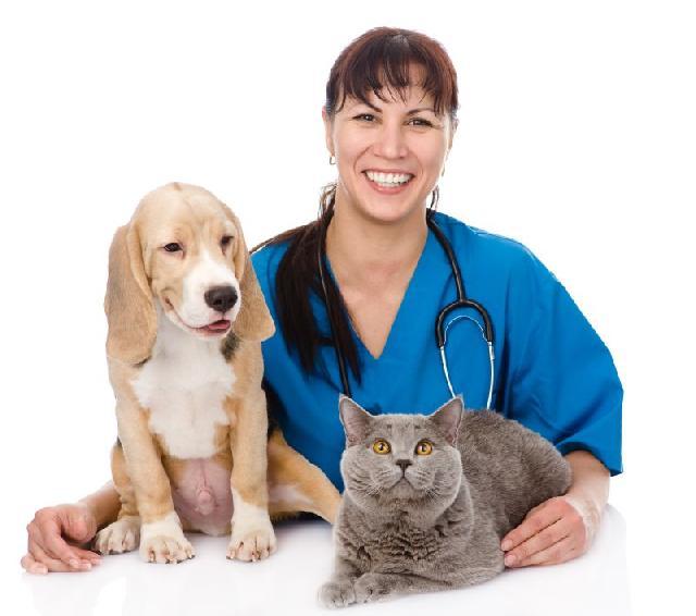 Esporotricose em cães e gatos