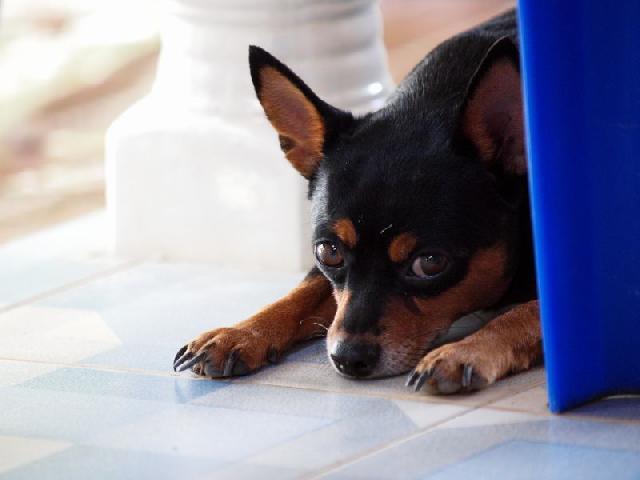 Oncologista veterinário e o câncer em cães e gatos