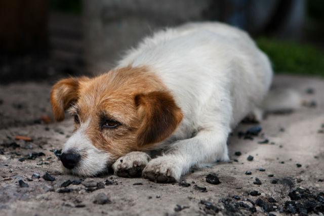 Abandono de cães