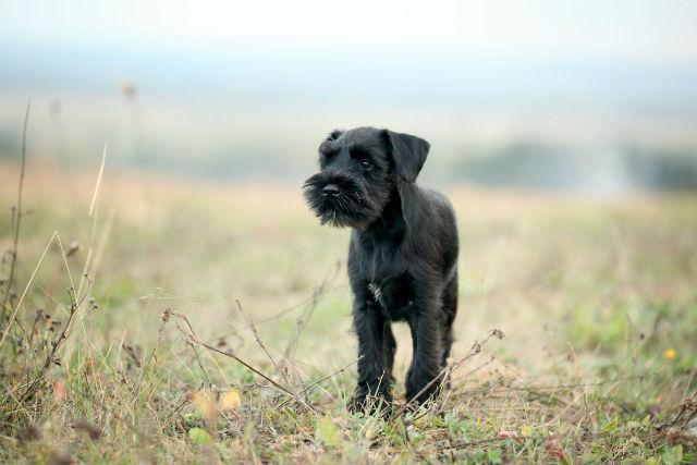 Abandono de pets ainda é problema grave no Brasil