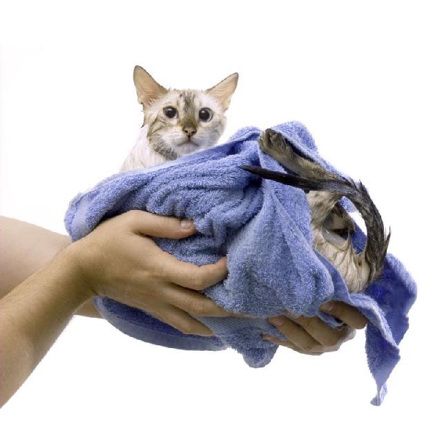 abrir-banho-tosa-gatos