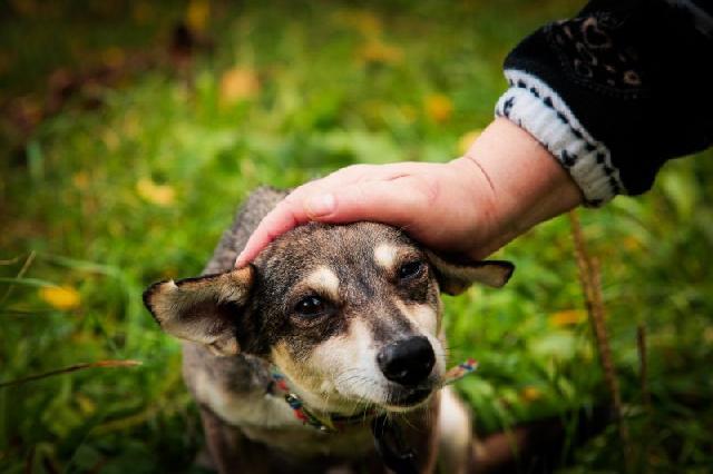 acupuntura-cachorros