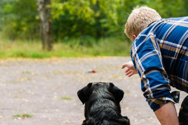 adestrando-cachorros-caes