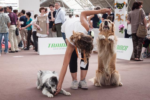 Adestrar cachorros