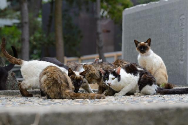 aids-em-gatos