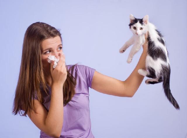 alergia-gatos