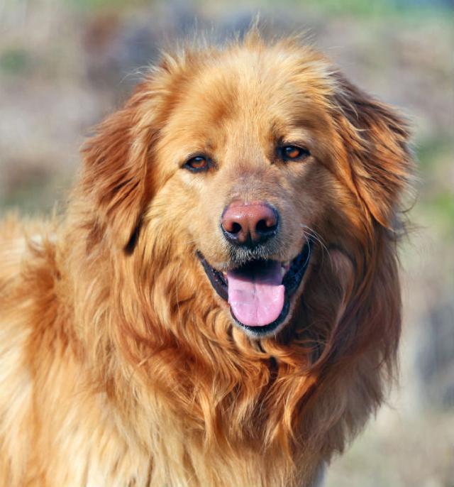Problemas que causam a necessidade da amputação de cabeça de fêmur em animais