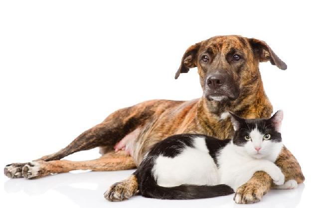 animais-para-quem-mora-sozinho