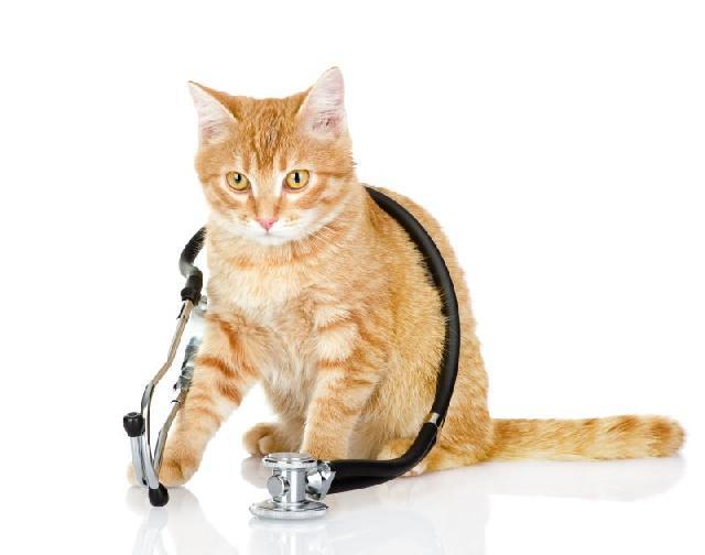 http://image.cachorrogato.com.br/textimages/antibioticos-felinos.jpg