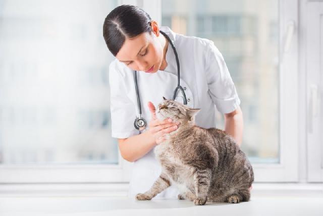 antibioticos-gatos