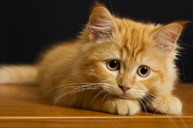 Antipulgas para cães e gatos
