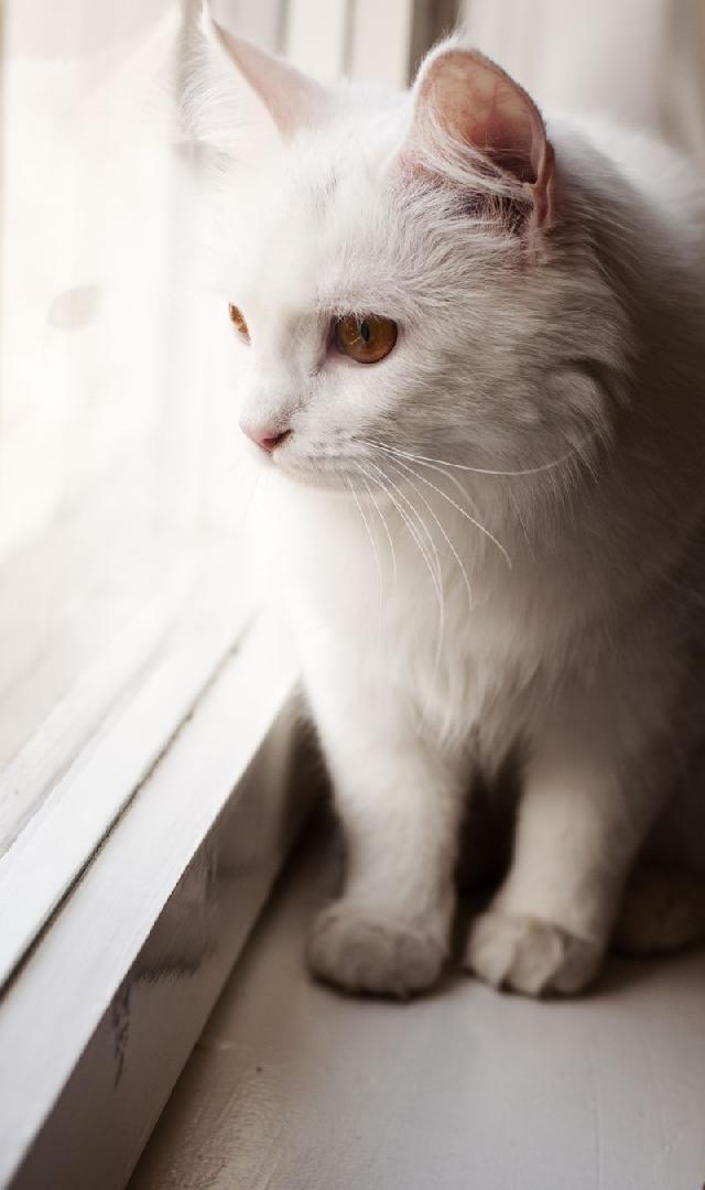 arvore-para-felinos