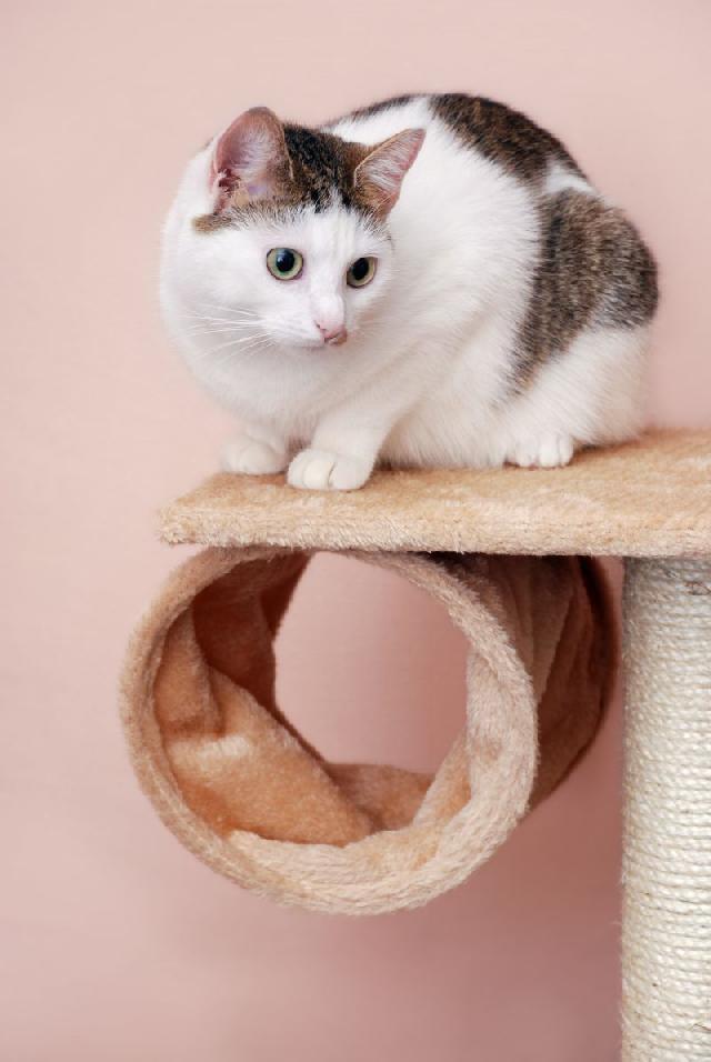 arvore-para-gatos