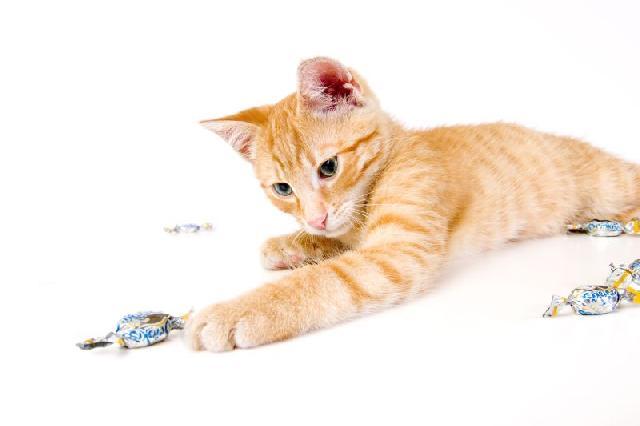 balas-para-gatos