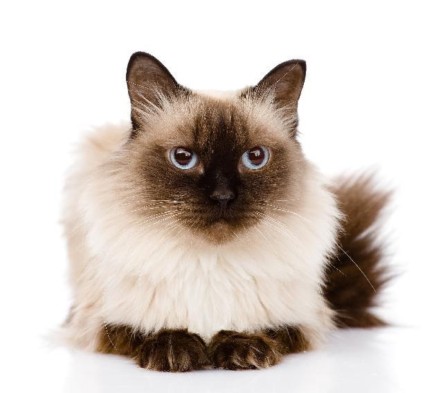 Entenda o Segredo dos Bebedouros para Gatos