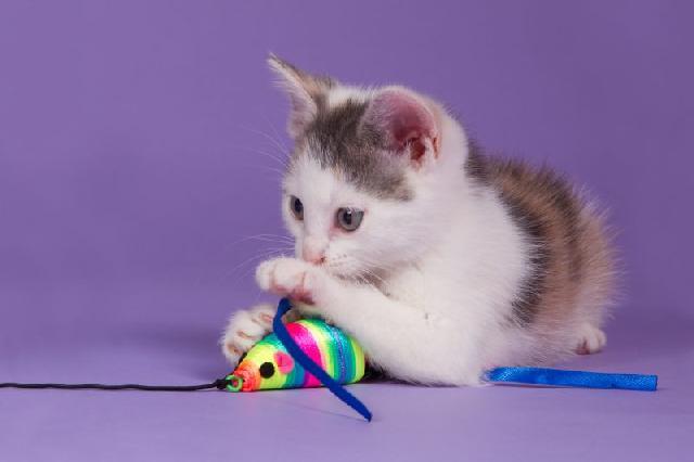 brinquedos-com-catnip