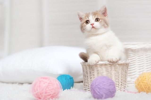 brinquedos-para-gatinhos
