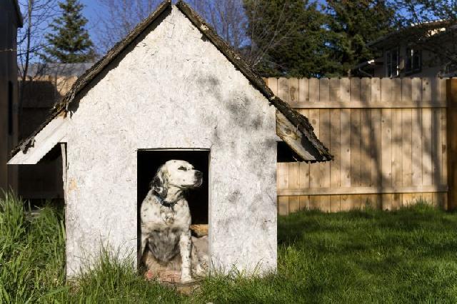 cachorro-casinha