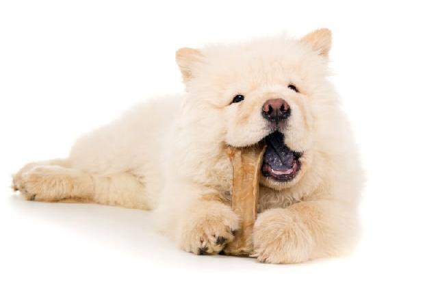 cachorro-comendo-petisco