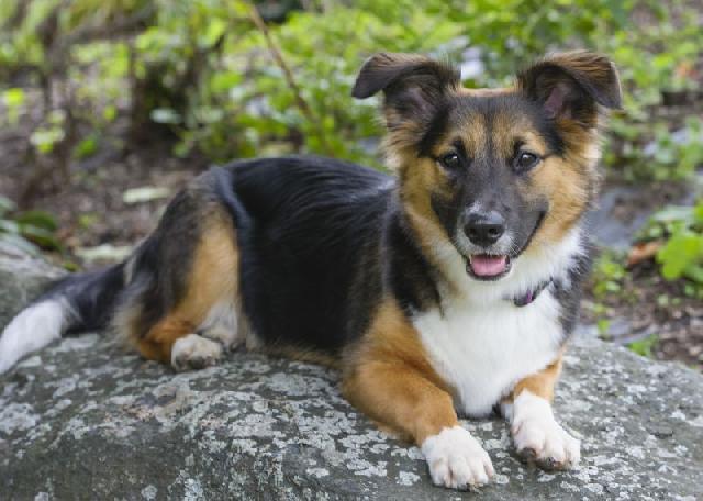 cachorro-feliz