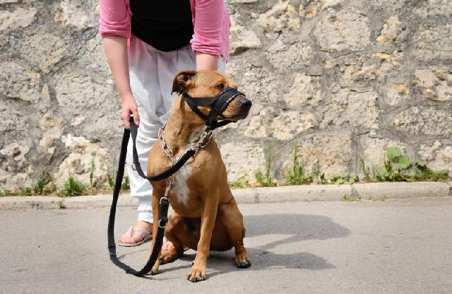 cachorro-focinheira