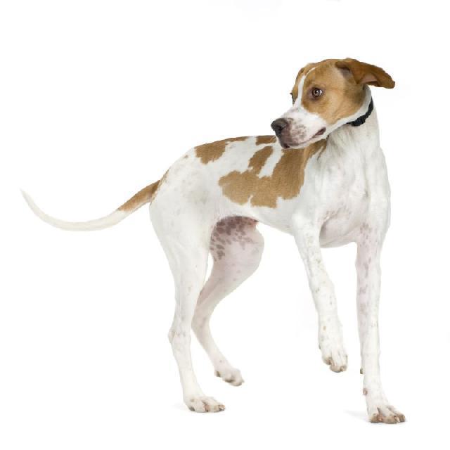 Atropelamento de cão ou gato