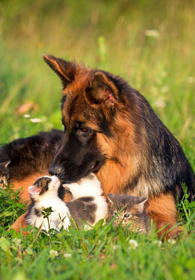 cachorro-gato-brincando