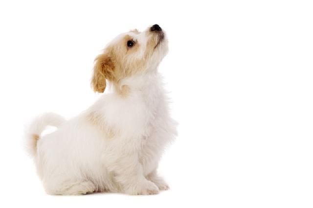 cachorro-hiperativo-3