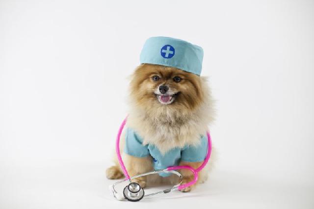 cachorro-hospital