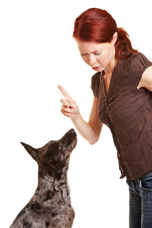 cachorro-latindo-excesso