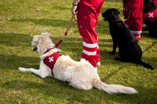 cachorro-salva-vidas