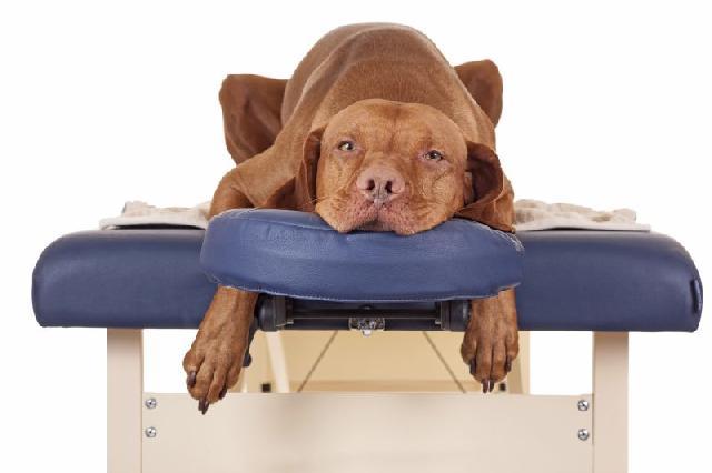 cachorro-spa