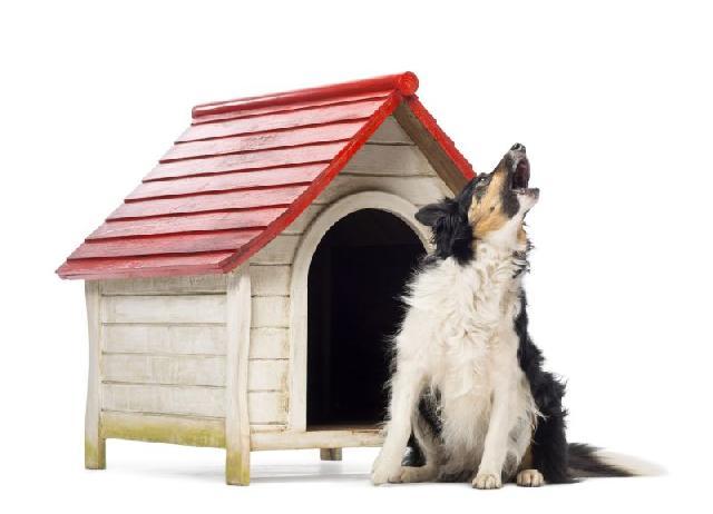 cachorro-uivando