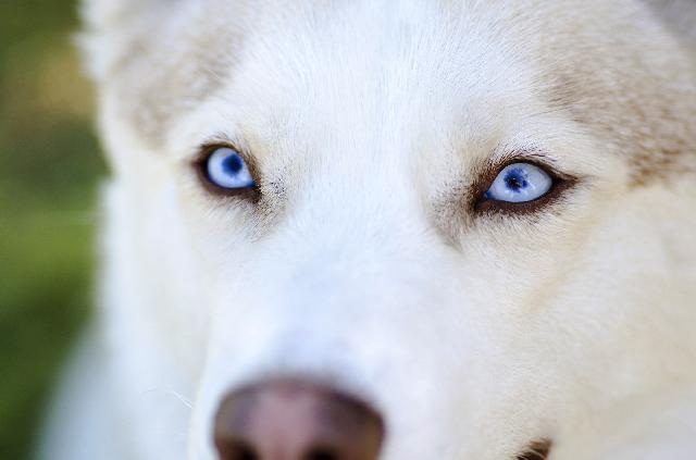 Cachorros bonitos