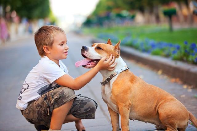 cachorros-caes-melhores-amigos-homem