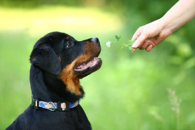 cachorros-comem-grama