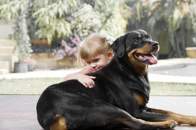 cachorros-grandes-criancas