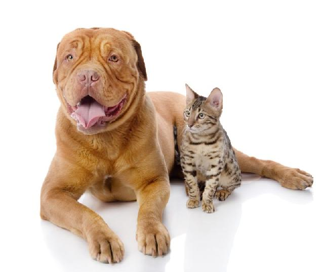 cachorros-grandes-gatos