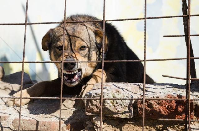 cachorros-guarda-treinar