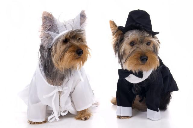 cachorros-nos-casamentos