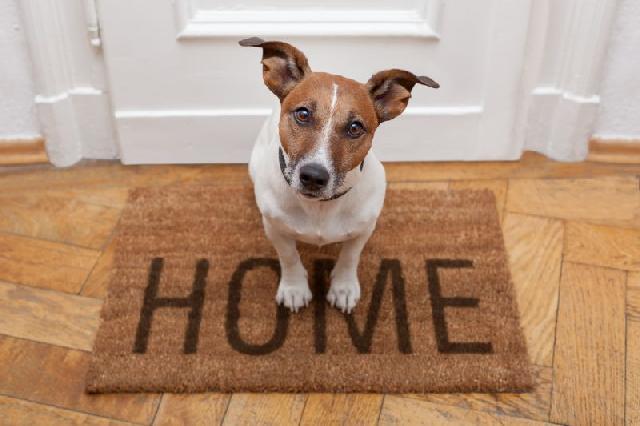 cachorros-para-quem-mora-sozinho