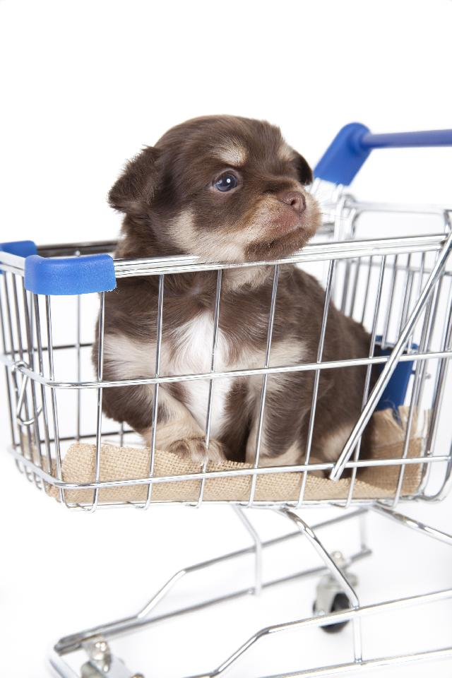 Cachorros para Vender