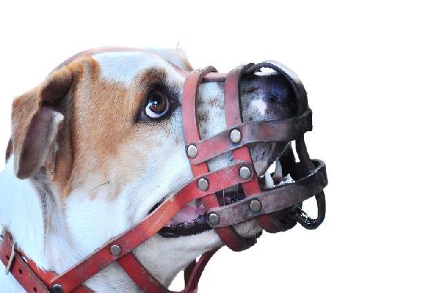 cachorros-perigosos
