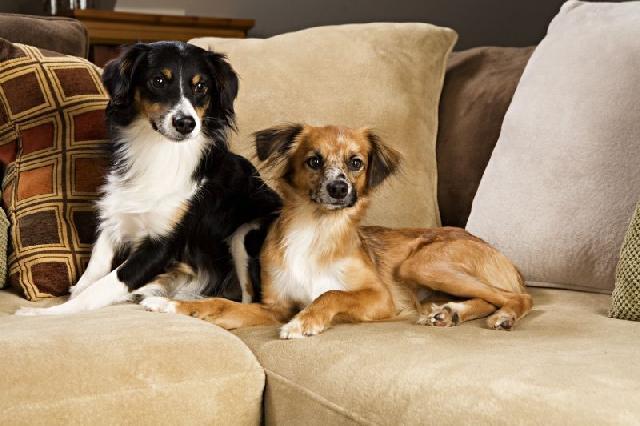 cachorros-pets-melhores-amigos-homem