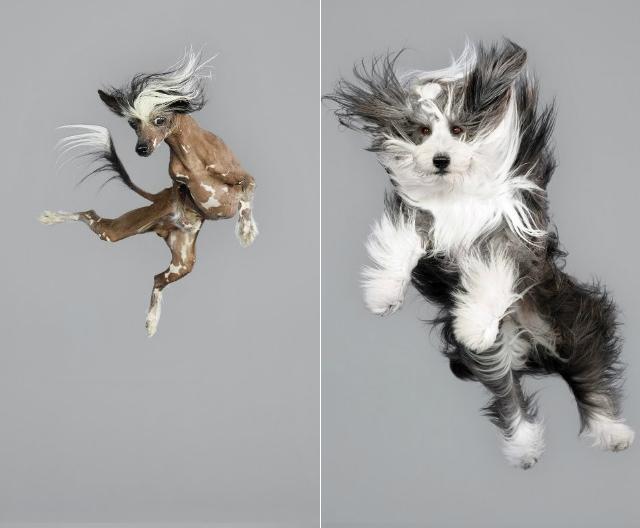 Ensaio fotográfico com cachorros voadores