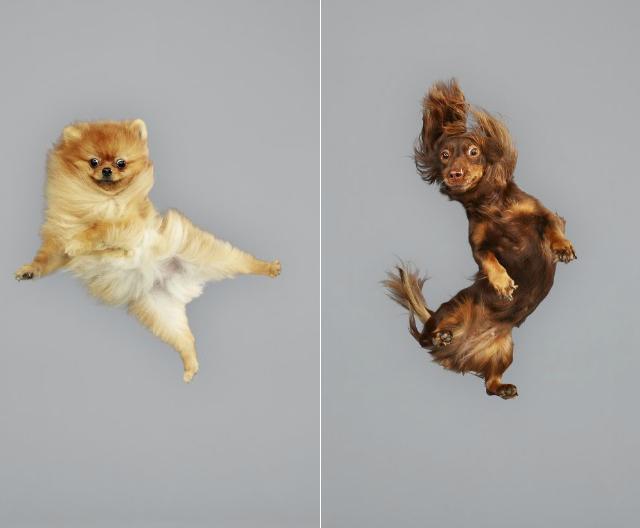 Cães voando