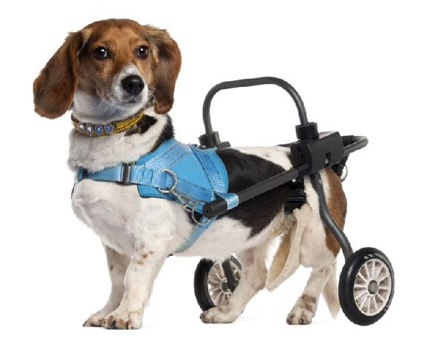 cadeira-roda-para-cachorro