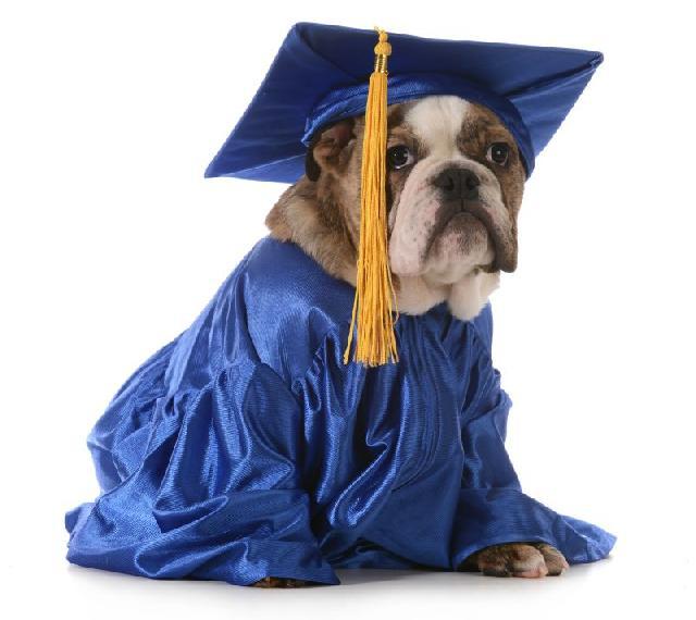 Estudo desvenda percepção dos cães