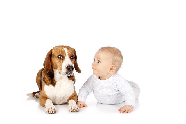Cães e Bêbes